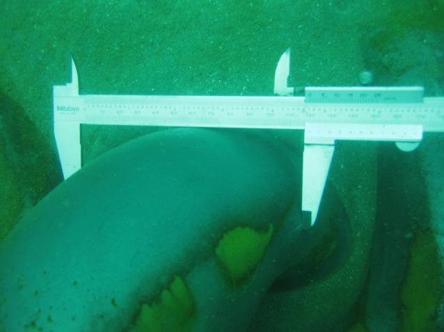 Kiểm tra tuyến xăng dầu dưới biển